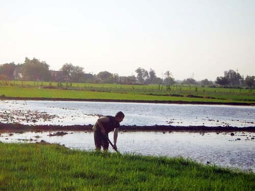 Egyptian Farmers Use Sewage Water to Irrigate Your Fruits and Vegetables