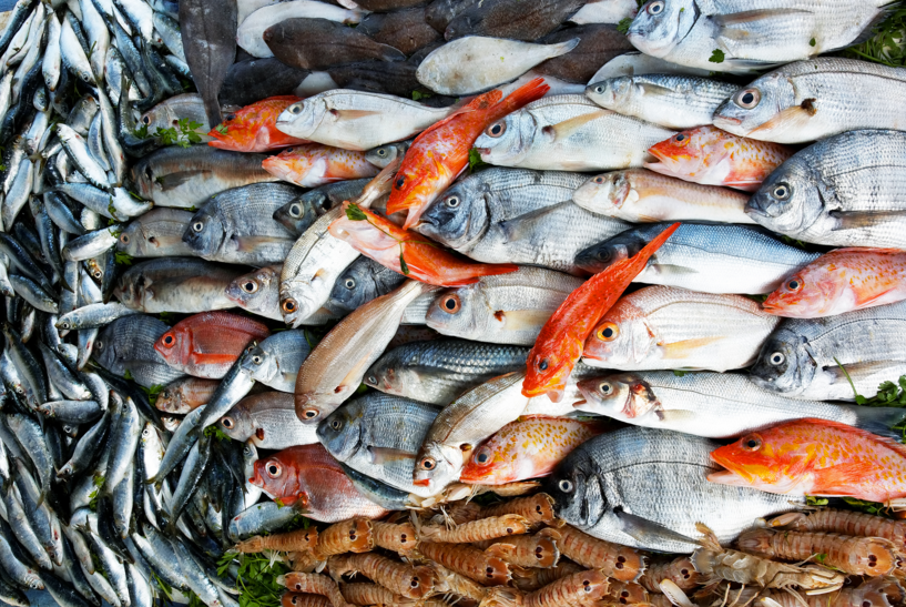 The Worst Type Of Fish To Watch Out For In Egypt