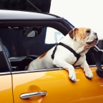 9 Tips for Keeping Your Car Safe During Egypt's Summer Heat