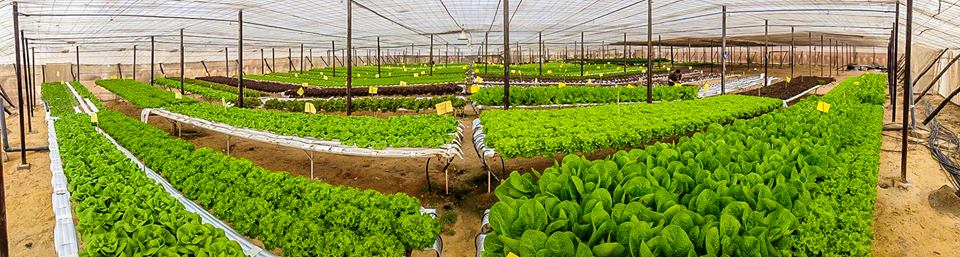 Your Guide to Local Farms in Egypt