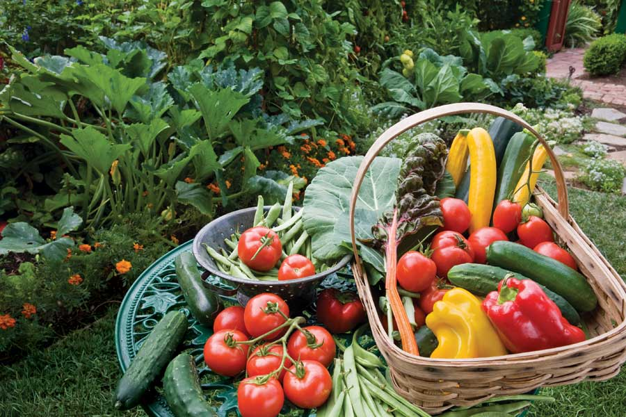 6 Things To Know Before Planting Your First Organic Garden in Cairo