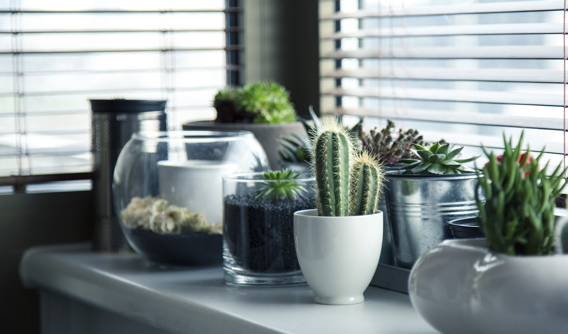 6 Plants That Will De-stress Your Home and Purify The Air