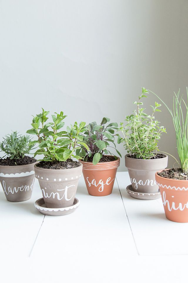 Make Your Sahel Home A Mosquito Free Zone With These Eight Herb Plants