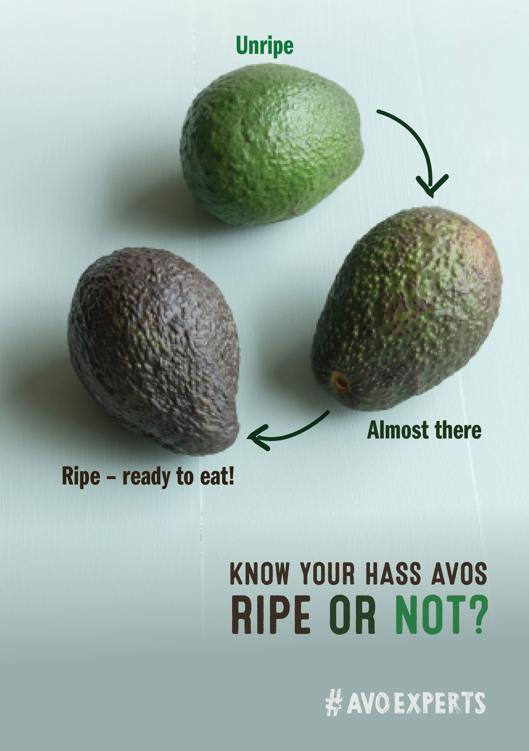 How To Choose The Perfect Avocado The Daily Crisp